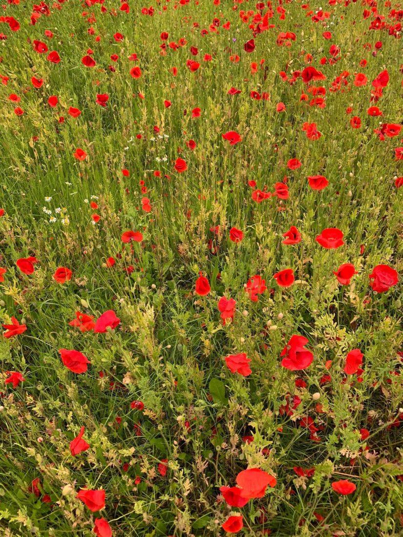 Abundance of flowers and nature